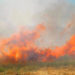 What Was Not Destroyed by Drought is Now Burned by Fire